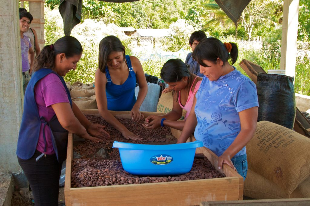 Women process cocoa at the Pangoa offices