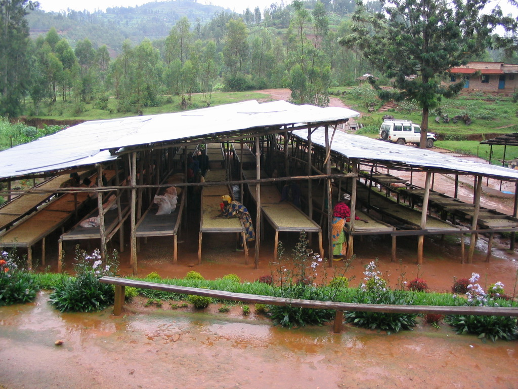 Farmers work at the Maraba coffee processing station during a downpour in the rainy season.
